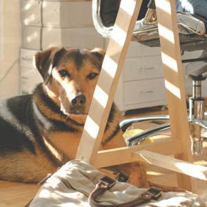 A Guide to Bringing Your Dog to Your Workplace