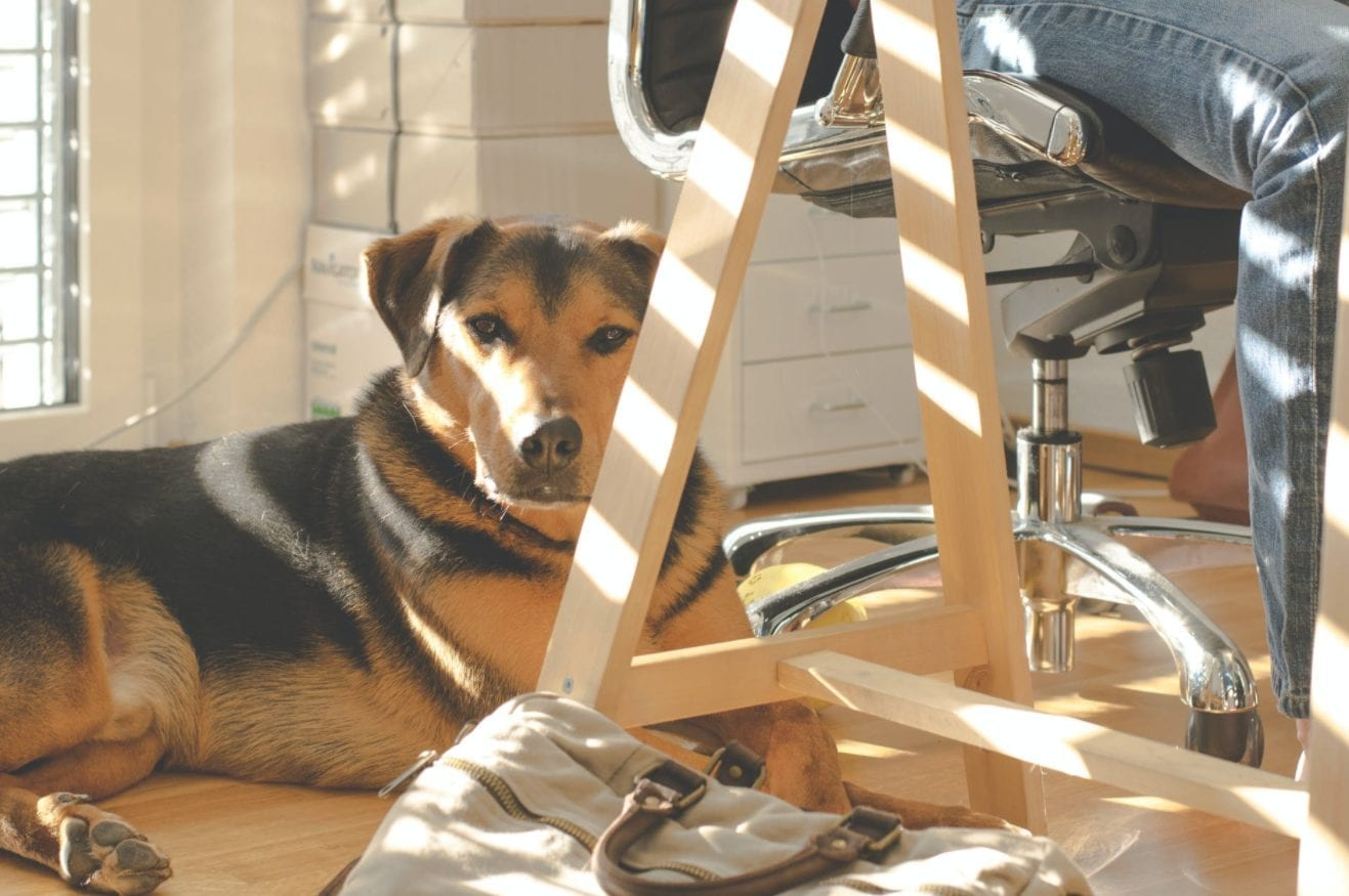 best practices for taking your dog to work; A Guide to Bringing Your Dog to Your Workplace