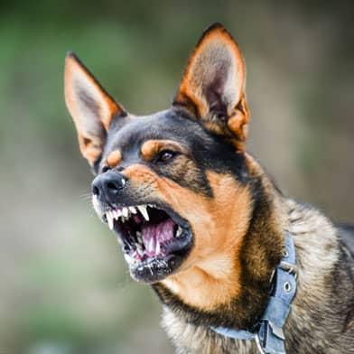 chicago dog bite lawyer; chicago dog bite injury attorney; chicago dog bite lawsuit faq; chicago dog bite injury law firm; chicago dog attack lawyer